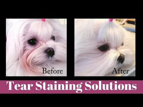 Tear Staining Solutions - Home Grooming Tips for Dogs