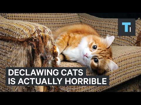 Why Declawing Your Cat Is Actually Very Painful For Them
