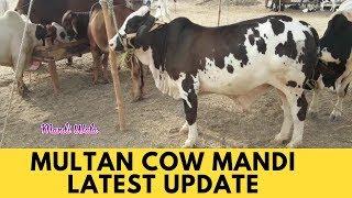 183 | Cow Mandi 2019/2020 Multan | Nukhra Bull & Sahiwal