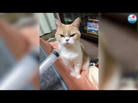 Very Angry Looking Cat! - Pets Central