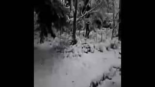 Szczeliniec wielki zima