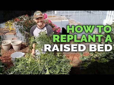 How to Replant and Prepare Raised Beds For Spring