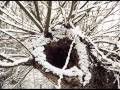 Twisted Sister Let It Snow