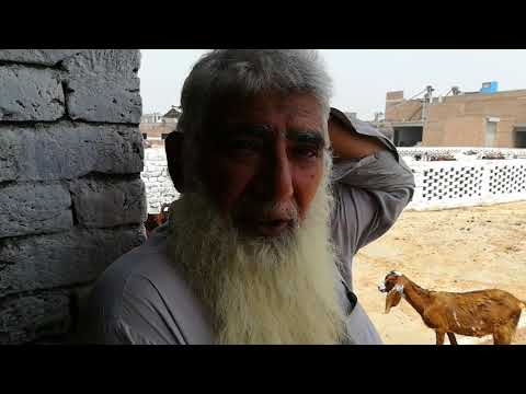 Gup shup With Mian Khalid, A Goat Farmer/ How to Start a Goat Farm / Some Useful Tips about Goat's