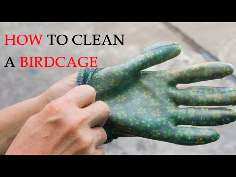 How to Clean a Birdcage