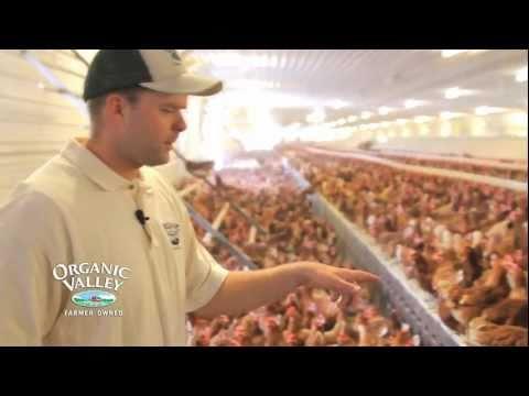 Organic Chicken Coop Tour of Wangsness Family Farm