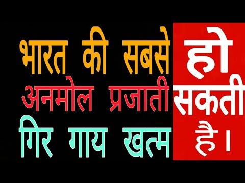 Modi का गायों को लेकर बड़ा फैसला, Gujarat में बनाएंगे / गिर गाय लुप्त होने के कगार पर