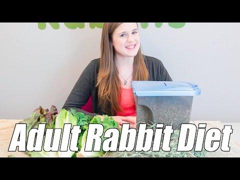 Adult Rabbit Diet