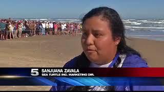 300 Sea Turtles Released into Ocean