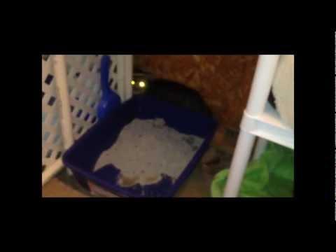 Trap Neuter Socialize Feral Cats Part 2