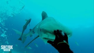 The Baddest Bumps   Shark Week
