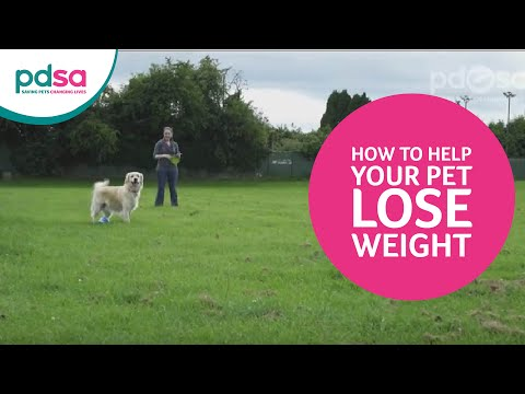 Getting your pet back on track if they're overweight