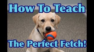 How To Teach Your Dog To FETCH Perfectly! (Dog Training Tutorial)