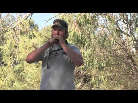 Talking Fowl 101 - Calling Australian Wood Ducks
