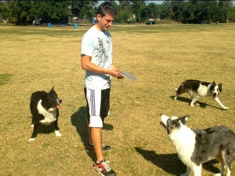 Secret dog training advice: Why your Dog Won't Fetch