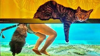 Best Funny Cat Videos That Will Make You Laugh All Day Long 😂😹