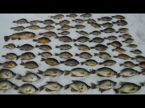 Vlog #4: Ice Fishing for Bass, Bluegill, Crappie, and Other Panfish