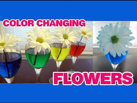 COLOR CHANGING FLOWERS Easy Kids Science Experiment