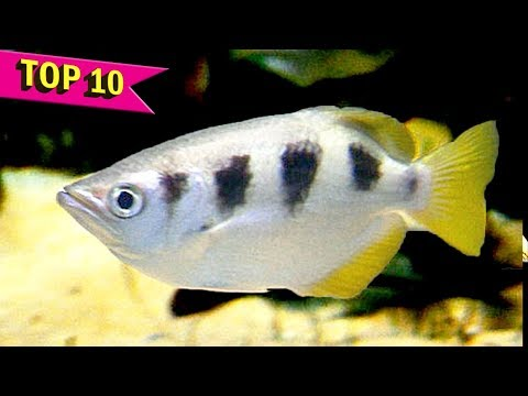 Top 10 Fish with Amazing Abilities