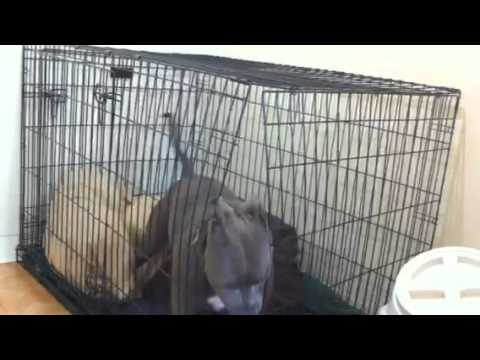 Dog breaks out of cage