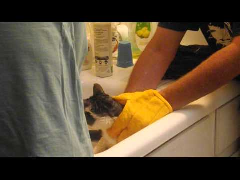 How to give a cat a flea bath, starring Lester Beans