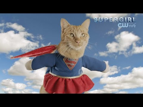 Cats Model Superhero Fashion // Presented By BuzzFeed & The CW's Supergirl