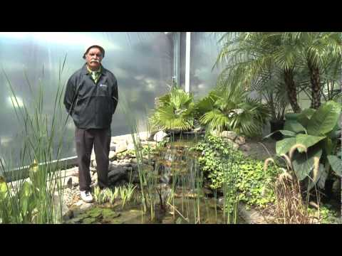 Prevent Pond Algae