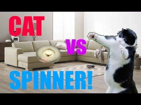 Fidget Spinner Cat?! [Must Watch]