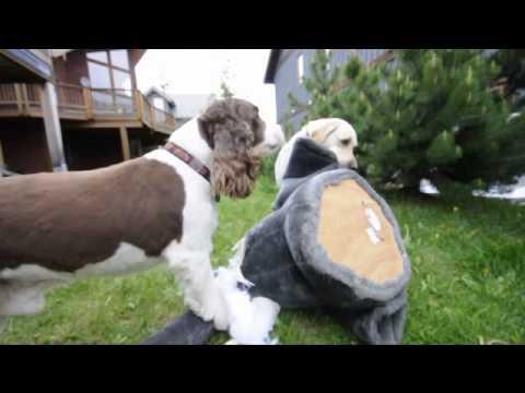 Millardog and Cooper vs Big Stuffed Ed the Elephant