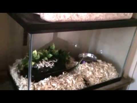 Garter Snake Care