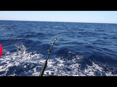 PERTH BLUE MARLIN - hooked up