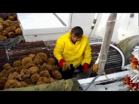 Greek sea sponge fisherman