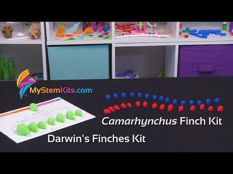 Darwin's Finches Kit & Camarhynchus Finch Kit