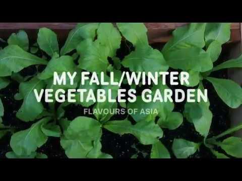 My Vegetables Garden In Fall/Winter