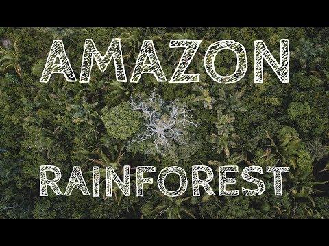 3 Days in Amazon Rainforest