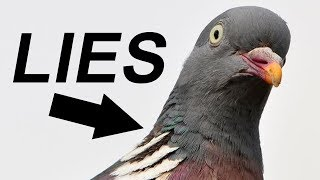 BIRDS. AREN'T. REAL. [MEME REVIEW] 👏 👏#39