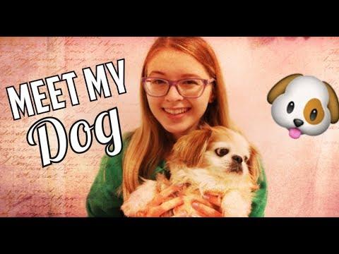 MEET MY DOG**Super Cute**