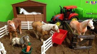 Caballos para niños 🐎  | Horses for children and The Alphabet Song | Mimonona Stories