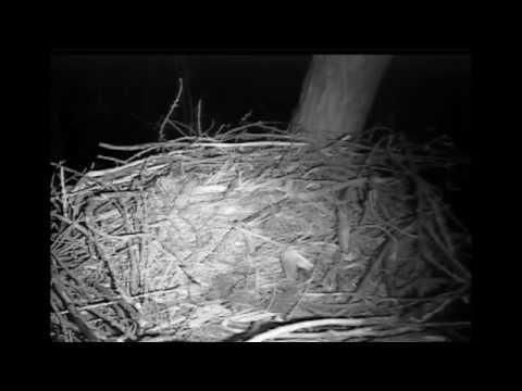 Mice In The House ~ Decorah Nest