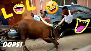 Amazing funny animal fail videos 2020