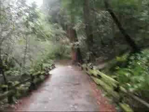 San Francisco - Muir Woods Excursion