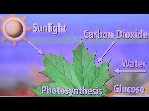 CO2: Essential to Life (Why Leaves Change Colour)