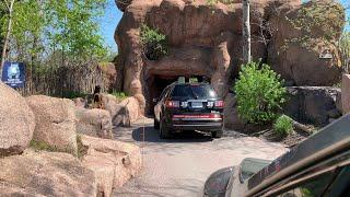 2020 Toronto Zoo Scenic Safari Drive-Thru for avoiding coronavirus COVID-19 (4K)