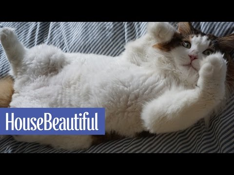 Meet the World's Largest House Cat | House Beautiful