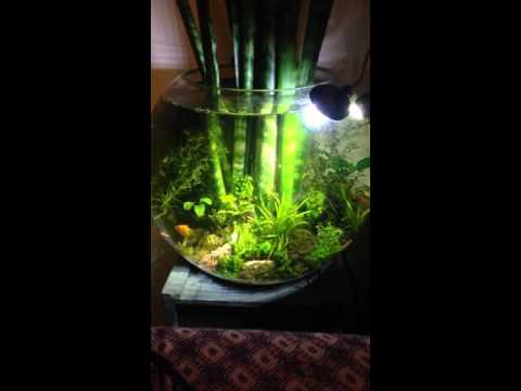 Cool aquarium garden in a bowl