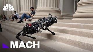 Cheetah 3 Is A Blind Robot That Doesn't Need Sensors To Navigate   Mach   NBC News