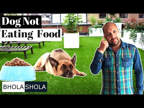 Health Problem - My dog is not eating food - Bhola Shola