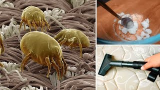 How to Remove Dust Mites From A Mattress Fast