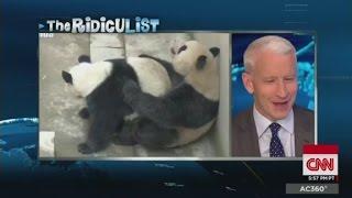 Panda gets frisky, breaks record