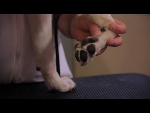 How to Sooth Pink, Irritated Dog Paws : Pet Health
